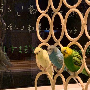 【岩手・盛岡】Chiko's Cafe〜インコが暮らす紅茶のカフェ〜